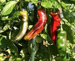 Sow No GMO Pepper Anaheim Chili Very Mild Non GMO Heirloom Garden Vegetable Perf - $2.74
