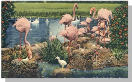 Miami, Florida/FL Postcard, Flamingos/Hialeah Park - $5.00