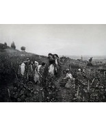 VINEYARDS in France Women Gather Grapes - 1888 Photogravure Print - $19.80