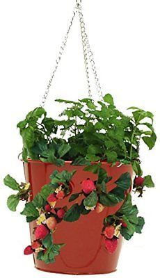 HIT 8396E XR Galvanized Hanging Strawberry Herb Floral Planter, Red
