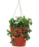 HIT 8396E XR Galvanized Hanging Strawberry Herb Floral Planter, Red - $551,42 MXN