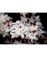 Jasmine Fragrance Oil 2 ounces - $6.00