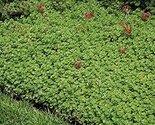 61cqakllrbl. sl1500  thumb155 crop
