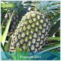 100pcs Pineapple Seed Fruit Seeds Bonsai Plants For Home Garden Deliciou... - $3.58