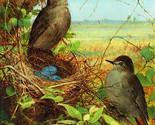 "11x14"" Cotton Canvas Print, Thrushes Nest, 1878, Fidelia Bridges, Blue Eggs, Lan"