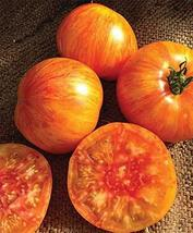 20 Seeds of Red Beauty King Tomato - Solanum lycopersicum - $13.70