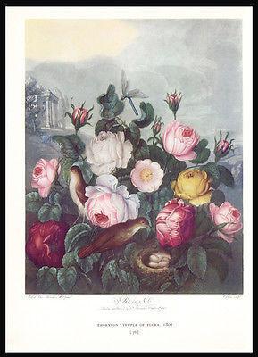 Roses Botanical Print 1938 Dunthorne Flowers Bird Nest Dragonfly