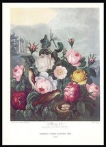 Roses Botanical Print 1938 Dunthorne Flowers Bird Nest Dragonfly image 1