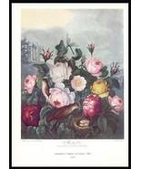Roses Botanical Print 1938 Dunthorne Flowers Bird Nest Dragonfly - $19.99