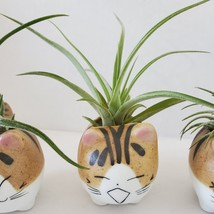 """Air Plant in Cat Planter 3"""", Kitty Ceramic Pot with Emotion Face image 8"""
