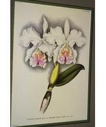 Lindenia Print Limited Edition Cattleya Mossiae... - $15.83