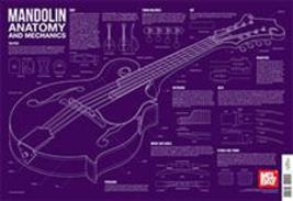 Mandolin Anatomy And Mechanics Wall Chart/Mandolin Decor!/New - $8.99