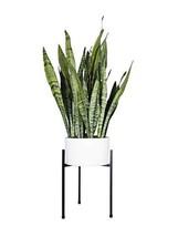 "10"" Plant Stand - Tripod Matte Black - Metal Planter Stand - Indoor Plan... - $38.13 CAD"