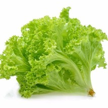 Lettuce, Tango For Salad Greens 250 Seeds #GRC98 - $12.17