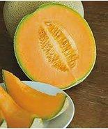 Cantaloupe Seed, Hales Best Jumbo, Heirloom, Organic, Non GMO, 500 Seeds... - $9.99