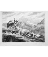 1801 ORIGINAL ETCHING Print by Howitt - Mountain Goat Family Buck Doe & ... - $20.92