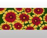 Indianblanketwildflower thumb155 crop