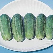 50 Seeds of Cucumber Wisconsin Smr58 Vegetable - $16.83