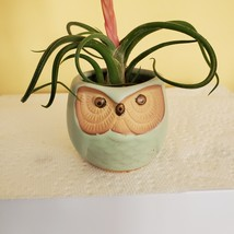 "Owl Planter with Air Plant, 2.5"", sea green ceramic pot, Tillandsia airplant image 4"