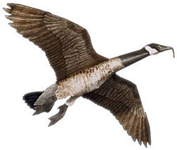 Jackite Canada Goose Decoy Kite / Windsock - $33.95
