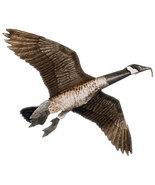 Jackite Canada Goose Decoy Kite / Windsock - $33.95