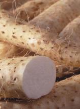 6pcs Perennial Herbal Vegetable Seeds,Very Healthy High Medicinal Value IMA1 - $14.99