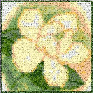 Magnolia33b