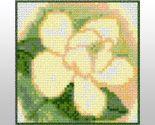 Magnolia33b thumb155 crop
