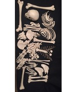 3B Scientific, Disarticulated Full Human Skeleton with 3 part skull, Mod... - $267.65