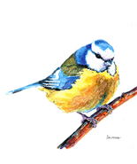"Akimova: TITMOUSE BIRD, watercolor, 5.5""x 6.25"" - $25.00"