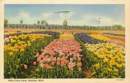 Linen Postcard MI L238 Nelis Tulip Farm Holland Flower Fields Curt Teich 1938 - $7.50