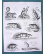 MAMMALS Squirrel Lemur Hamster Jerboa Rat Dormouse - 1840 Fine Quality P... - $13.77