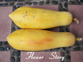 Yellow Gold Papaya Heirloom  Seeds, Delicious Fruit Seeds  home garden p... - $3.00