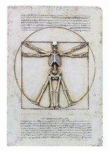 Vitruvian Skeleton Plaque Statue - $99.74