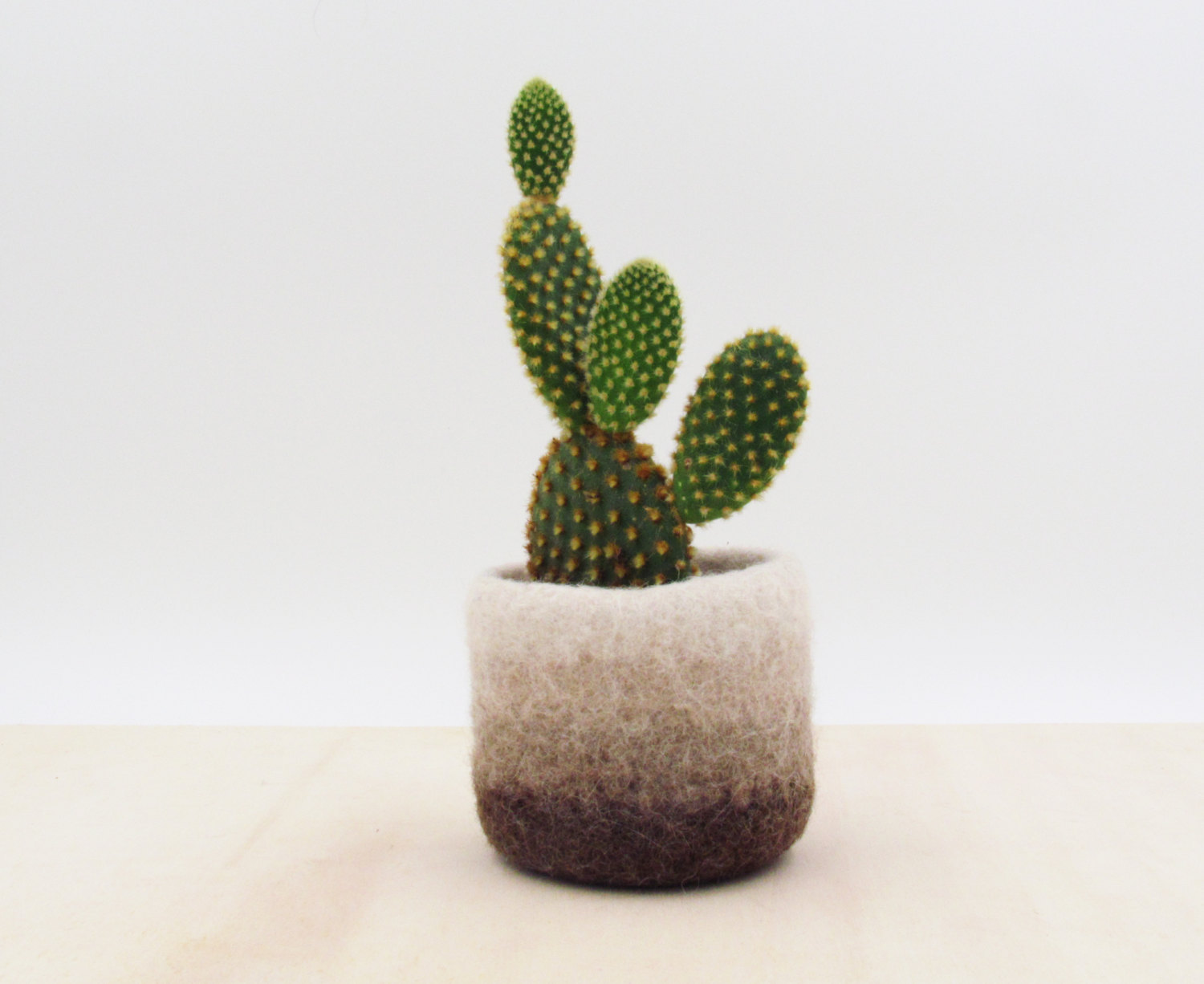 Felt succulent vase / Earth / felted planter / cactus vase / Ombre brown / house