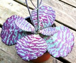 "KALANCHOE ""DESERT SURPRISE"" humilis rare succulents exotic cactus seed 2... - $20.61"