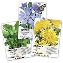 Dandelion Seed Collection Package Needs - $10.00