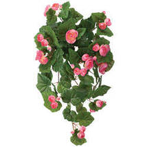 Begonia Hanging Stem by OakRidge-Pink - $17.74
