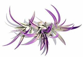 Purple Air Plant Mix of 3 Airplant, Tillandsia, Wedding Favors, Terrariums - $32.67