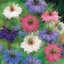 Love in a Mist Mix Flower Seeds (Nigella Damascena) 50+Seeds - $5.43+