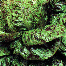 SHIP FROM US FRECKLES LETTUCE - 2 OZ ~50,000 SEEDS - ROMAINE - HEIRLOOM,... - $57.36