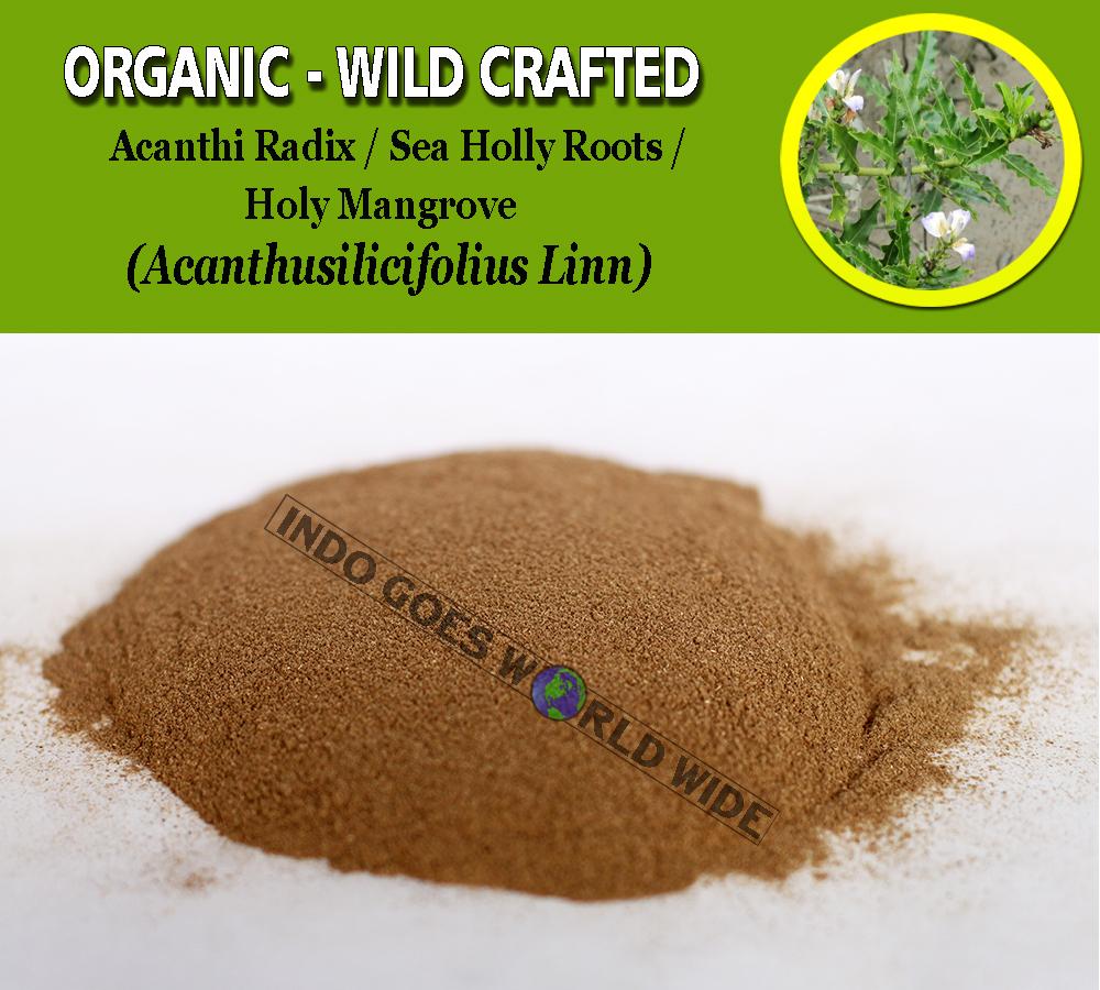 POWDER Acanthi Radix Sea Holly Roots Holy Mangrove Acanthus Ilicifolius Organic