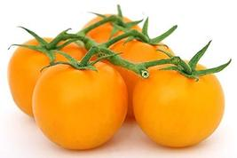 50 Tomato Seeds Sunsugar Seeds Sun Sugar Tomato TkMorebargins - $37.62