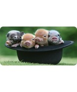 baby pigs in a hat animal cute metal license plate usa made - $28.49
