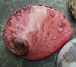 Abalone Seashell Lot Rainbow Shell Dish Polished Iridescent Smudge Mothe... - $44.53