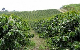 green coffee beans 20 pounds costa rica washed process - $138.60