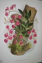 Lindenia Limited Edition print Comparettia Falcata Orchid Collectible Wa... - $14.24