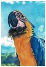 Parrot - A4 print of original colour pencil artwork  + matt and mount - $40.00