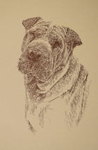 Chinese Shar Pei Dog Art Portrait Print #74 Kline will add dogs name fre... - $49.45