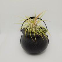"Airplant in Black Cauldron, Halloween 2"" plastic planter, Witch pot air plant image 5"
